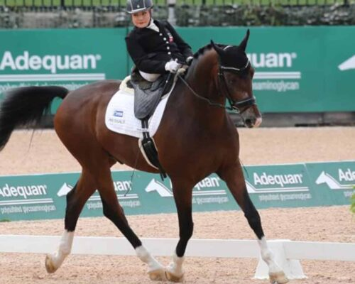 Para-Equestrian and a brief description on eligibility and classifications